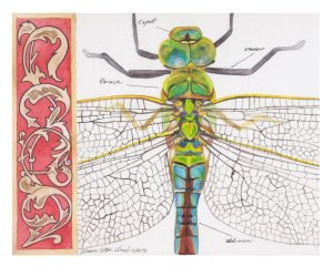 the_biologist_s_book_by_dawnstarw-d6cq7ye (1)